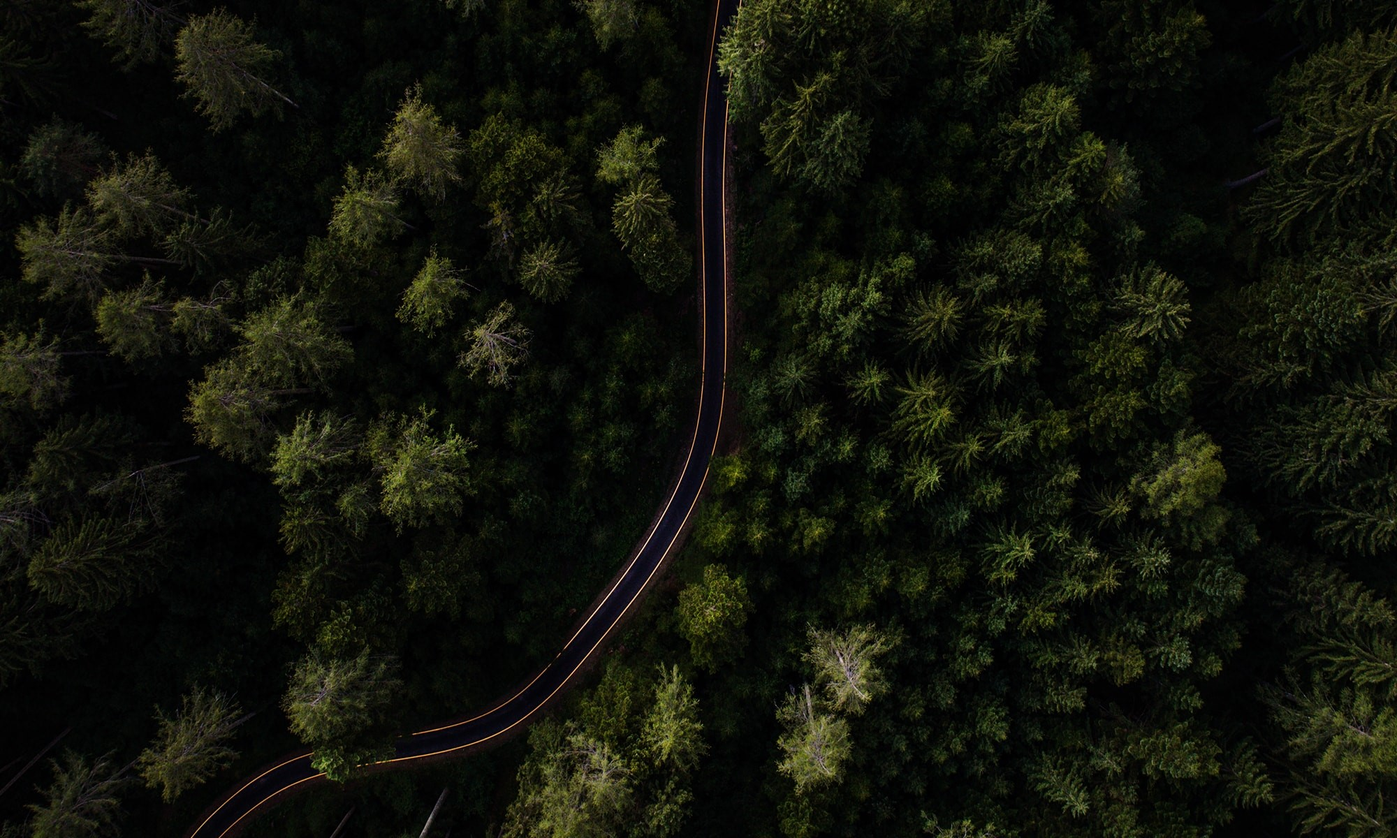 Forest with a winding road